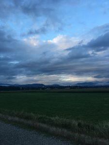 Evening farm fields
