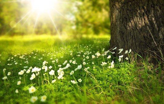 June Summer Meadow