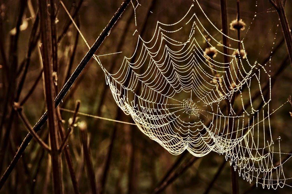 Cobweb Spin