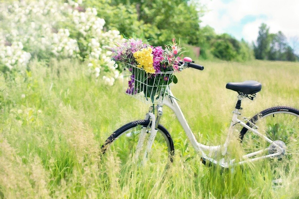 Bicycle Meadow