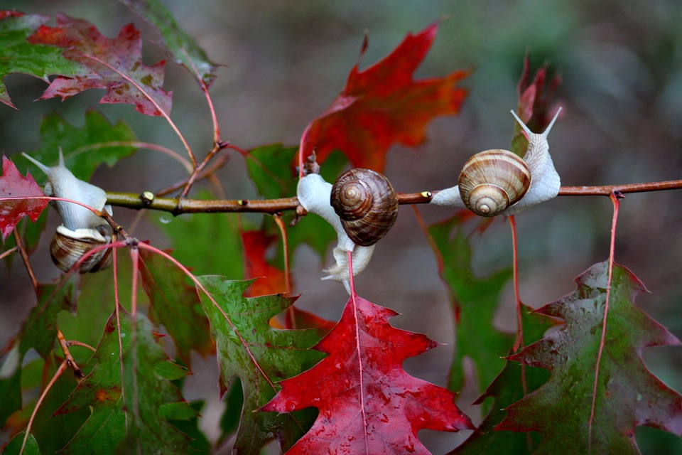 Snails Oak Tree